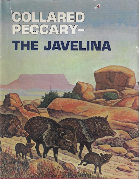 Image for Collared Peccary: The Javelina